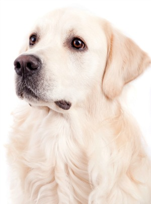 Advantages of Canine DNA Testing