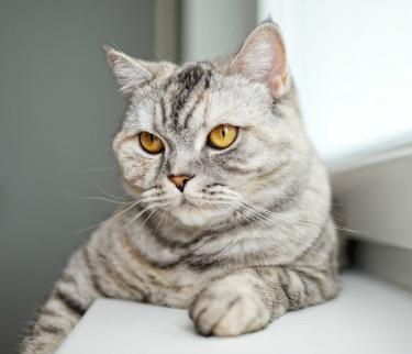 Cat DNA Test