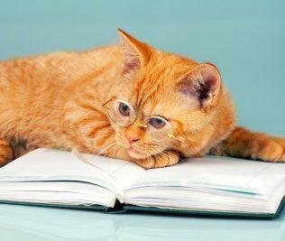 Cat DNA Tests