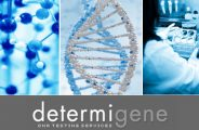 determigene.com dna testing review