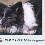 optigen.com dog dna testing review