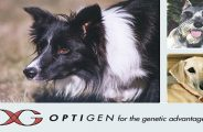 optigen.com dog dna testing review