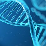 what is mtdna