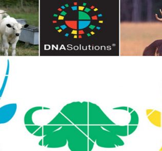 animal dna tests at dna solutions usa